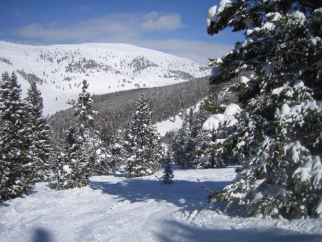 Blue Sky Basin's wooded terrain is Dave's favourite part of Vail's 5000+ acres of varied terrain