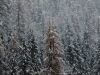 Snow is falling in the Alps - but where?