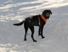 Tour op allows dogs on ski holidays